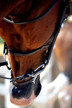 """Find out additional details on """"Horse Show"""". Browse through our site. Equestrian Boots, Equestrian Outfits, Equestrian Style, Equestrian Fashion, My Horse, Horse Girl, Horse Riding, Horse Photos, Horse Pictures"""