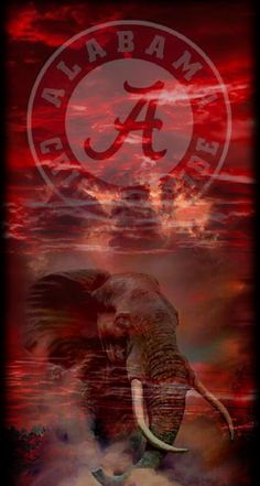 Alabama Tide, Alabama Logo, Alabama Crimson Tide Logo, Alabama Baby, Crimson Tide Football, Alabama Football Team, College Football, Football Memes, Football Season