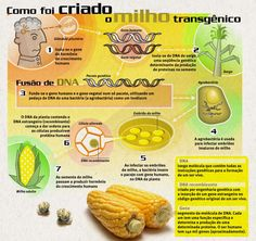 Transgenic Corn – by Luiz Baltar
