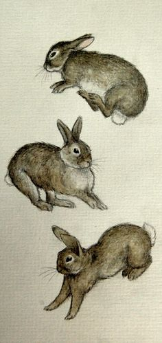 Jumping Rabbits by Moussee  Sometimes you just don't need a background.