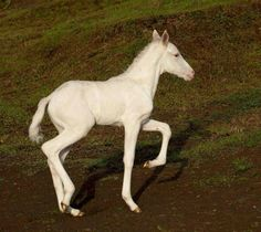Photo by Nina Fuller. Beautiful Horses, Animals Beautiful, Majestic Animals, White Horses, White Fur, Pony, Creatures, Pure Products, Cute