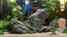 fish tank images - Google Search