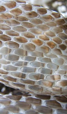 Snakeskin Textures - brown ombre colour inspiration | Image via flickr.com
