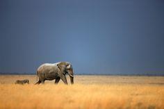Namibia Safari im Februar