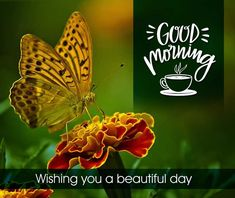 Best Beautiful Good Morning Images Best Collection Only Good Morning Images Good Morning Wishes Love, Lovely Good Morning Images, Latest Good Morning, Good Morning Images Download, Good Morning Gif, Good Morning Picture, Good Morning Flowers, Morning Pictures, Inspirational Good Morning Messages