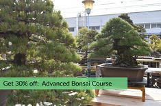 """Discounted pre-enrollments now available for the """"Advanced Bonsai Course"""" with Bjorn Bjorholm! #bonsai"""