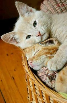 I love cats, because in their vicinity I remember again and again how precious and beautiful life is