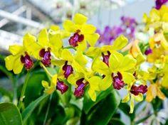 As orquídeas ficam lindas em qualquer ambiente, seja no jardim, na sala, no escritório, elas sempre dão um toque especial e chamam muito a atenção. Mas é preciso saber cuidar da orquídea para que ela fique sempre muito vistosa. E há várias dicas interessantes que ajudarão você a cuidar melhor de sua orquídea. E os