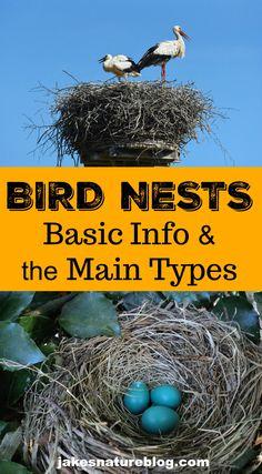 Bird Nests For Dummies - Basics & Main Types - Bird nest - Prime Für Dummies, Bird Facts, Common Birds, Facts For Kids, Cardinal Birds, Bird Theme, Bird Silhouette, Backyard Birds, Small Birds