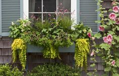 Plant a Better Window-Box Garden - This Old House Window Box Plants, Window Planter Boxes, Planter Ideas, Best Windows, Flower Planters, Flower Containers, Foliage Plants, Garden Boxes, Flower Boxes