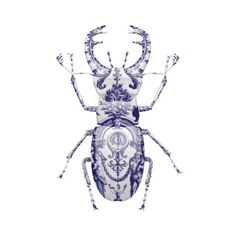Delft Stag Beetle by Magnus Gjoen - something destructive can be made into fragile and beautiful object