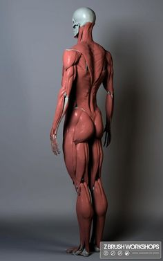 Anatomical reference