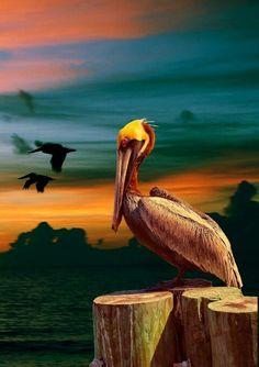 #pelican ~ETS