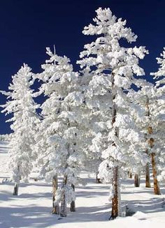 Snow covered trees are beautiful