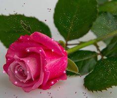 How to make a Kawasaki Rose (Phu Tran Variation) Beautiful Pink Roses, Beautiful Gif, Simply Beautiful, Animiertes Gif, Animated Gif, All Flowers, Pretty Flowers, Flowers Gif, Roses Gif