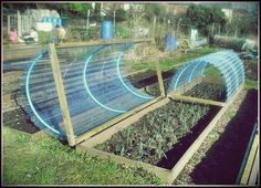 Here are the Home Vegetable Garden Design Ideas. This article about Home Vegetable Garden Design Ideas was posted under the Home Design category. If you want to see more Ideas in Home Design category, you can visit that category page. Allotment Gardening, Greenhouse Gardening, Gardening Tips, Greenhouse Wedding, Allotment Design, Allotment Ideas, Texas Gardening, Gardening Services, Cold Frame Gardening