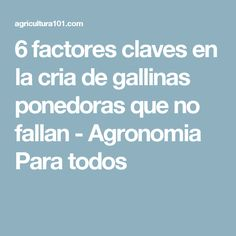 9 Ideas De Gallinas Camperas Gallinas Criar Gallinas Gallinas Ponedoras