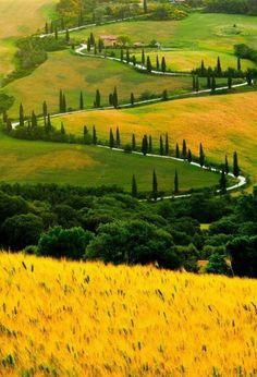 les champs de blé en Italie, agritourisme toscane