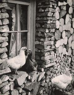 Martin Martinček - Obloženie drevenice-1963–1966 Black White Photos, Black And White, Wooden Cottage, Wood Supply, Heart Of Europe, Chickens Backyard, Animal Kingdom, Old Photos, Art Photography