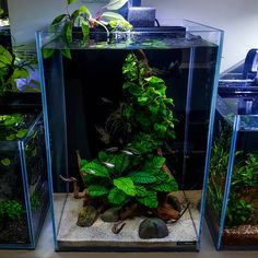 nice to see this nano aquascape still kicking after almost a year - The world's most private search engine Home Aquarium, Nature Aquarium, Aquarium Design, Planted Aquarium, Aquarium Fish, Aquascaping, Fish Tank Themes, Nano Cube, Aquarium Landscape