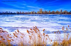 Beautiful icy blue at Central Park reservoir by @isardasorensen...