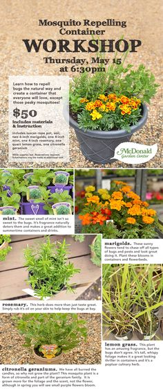 A container everyone will love...except those pesky mosquitoes! Learn how to repel bugs the natural way using plants and flowers that naturally repel mosquitoes and other pests while looking great through the hot, hazy days of summer.