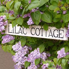 beautiful and I dream of having a cottage and calling it my Lilac cottage.lilacs are my favorites and my photography is Lilac Dreams Photography! Cottage Names, Cottage Signs, Personalized Signs For Home, Jardin Decor, Lavender Cottage, All Things Purple, My Secret Garden, Gardening, Shades Of Purple