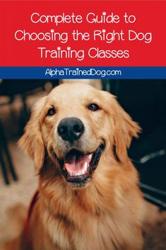 Need some help choosing the best dog training classes? Read on for our complete guide to the different types of classes and how to pick the best trainer! Dog Training Books, Agility Training For Dogs, Dog Training Classes, Best Dog Training, Dog Agility, Brain Training, Puppy Classes, Best Dog Toys, Dog Search