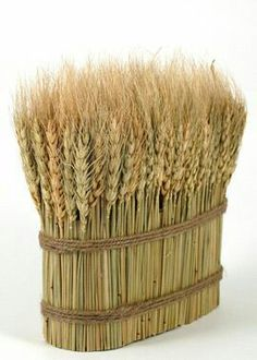 dried wheat bundle from jamali garden Wheat Decorations, Flower Decorations, Pallet Pathway Ideas, Bonnet Rose, Paper Crafts Origami, Deco Table, Fall Harvest, Flower Vases, Dried Flowers