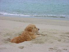 Puppy in the sand