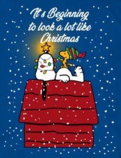 Looking a lot like Christmas Christmas Jokes, Peanuts Christmas, Charlie Brown Christmas, Christmas Art, Christmas Greetings, Christmas Wishes, Funny Christmas Pictures, Snoopy Images, Snoopy Pictures