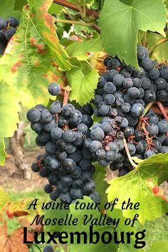 Je ferai un degustation de vin visite a la Moselle