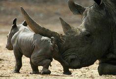 Twitter, Rhinos. pic.twitter.com/L0T51A8vLm