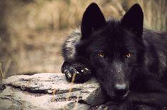 Wolves & Wind -