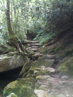 Part of the Ramsey Cascade Trail, Smokies. Smoky Mountains Hiking, Appalachian Mountains, Mountain Hiking, Great Smoky Mountains, Ramsey Cascades, Appalachian People, Mountain Music, Blue Ridge Parkway, Waterfalls