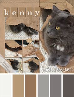 """Color palette for digital scrapbooking layout """"Kenny"""" from pixels2Pages.net. Created in digital design software from Panstoria. Photos by Penny Peterson."""