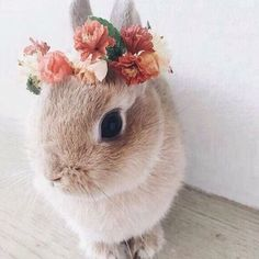 A beautiful flower wreath for a beautiful bunny - Süße tiere - Adorable Animals Animals And Pets, Funny Animals, Cute Baby Bunnies, Pictures Of Baby Bunnies, Bunny Pics, Cute Little Animals, Adorable Animals, Hamsters, Rodents