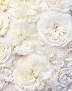 Paris Print Gallery Wall - The Randi Garrett Collection, Glam Blush and Neutral Gallery Wall, Large Wall Art, French Home Decor White Roses, White Flowers, Beautiful Roses, Beautiful Flowers, Pretty Backrounds, Love Backgrounds, David Austin Roses, Flower Wallpaper, Large Wall Art