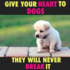 Dogs are the only living beings that love you more than themselves. #myunikorn