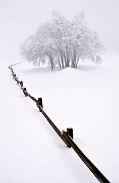 A snow-covered tree stands in the distance amidst thick snow. A line formed of the tops of a black fence leads the eye toward it
