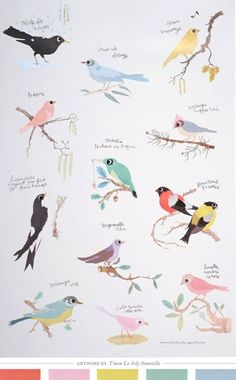 Bird illustration love colors