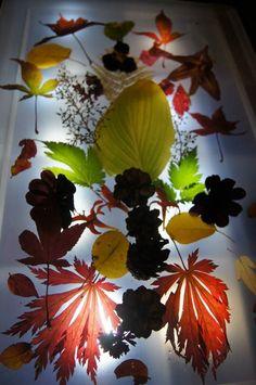 on the light table - Fantasifantasten ≈≈ Reggio Emilia, Reggio Children, Reggio Inspired Classrooms, Light Board, Autumn Activities, Infant Activities, Autumn Theme, Fall Harvest, Light And Shadow