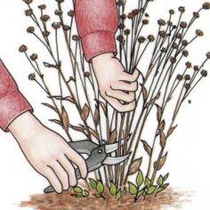 Indicaciones para la limpieza de invierno, poda en primavera, siembra, la plantación de bulbos al final de temporada, la creación de contenedores para dividir las plantas perennes, la plantación de árboles, y la planificación de un huerto. | greengardenblog.com