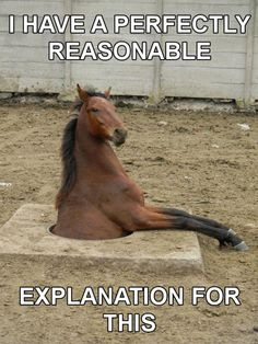 Please don't leave holes for horses!