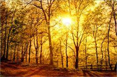 Sonne und Wald Poster von Pirmin Nohr baum bäume Landschaft Laub Licht natur schatten sonne sonnenuntergang Zaun tree, trees, landscape, foliage, leaves, light, nature, shadow, sun, sunset, sundown, fence