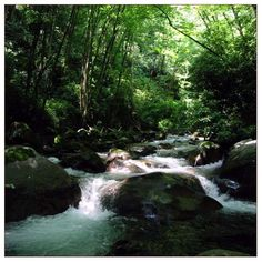 Enjoy the peace and relaxation of the running streams in the Great Smoky Mountain National Park in Tennessee