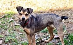 3/20/17 Sussex, NJ Check out Ladybug's profile on AllPaws.com and help her get adopted! Ladybug is an adorable Dog that needs a new home. https://www.allpaws.com/adopt-a-dog/terrier-mix-feist/6040948?social_ref=pinterest