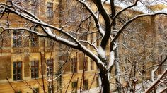 A téli udvar