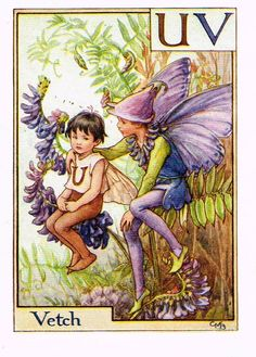 "Cicely Barker's Fairy Print - ""VETCH"" - Children's Lithogrpah - c1935"