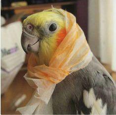 πουλί κορίτσια κανάλι μαύροι πουλί